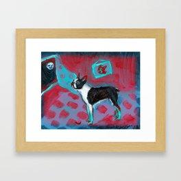 Boston Terrier senses smiling moon Framed Art Print