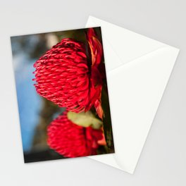 Huge red Waratah flowerheads in spring Stationery Cards