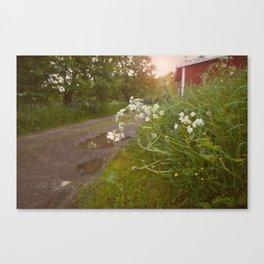 summerevening Canvas Print