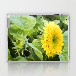 Teddy Bear Sunflower from Bud to Bloom Laptop & iPad Skin