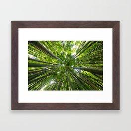 Looking Up A Bamboo Forest Canopy, Haleakala, Maui, Hawaii Framed Art Print