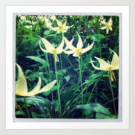Fawn Lilly  Art Print