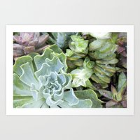 Blue Greens Art Print