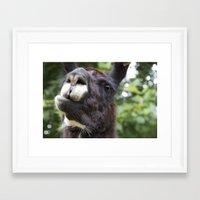 llama Framed Art Prints featuring Llama by Veronica Ventress