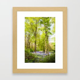 Bluebell Woods In Spring Framed Art Print