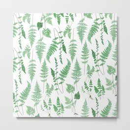 Ferns on White I - Botanical Print Metal Print