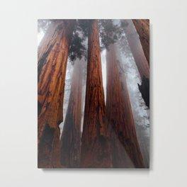 Tall Redwood Trees Metal Print