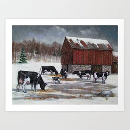 Holstein Dairy Cows in Snowy Barnyard; Winter Farm Scene No. 2 Art Print