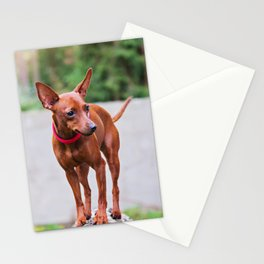 Portrait of red miniature pinscher dog Stationery Cards