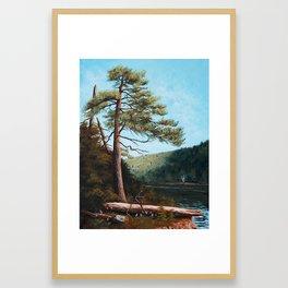 Acadia pine, Jordan Pond Framed Art Print
