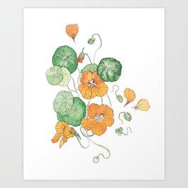 Orange Nasturtium Edible Weeds Illustration Art Print