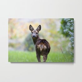 ROE DEER LOOKING AT YOU Metal Print