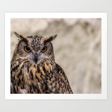The Look of an Owl Art Print