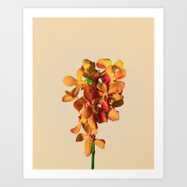 Minimal Orchids and Colors Art Print