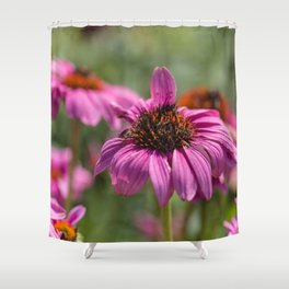 Pink Rudbeckia flower in summer garden Shower Curtain