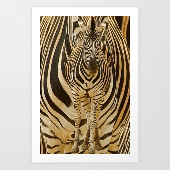 Zebra on Zebra Art Print