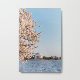 Jefferson Memorial and cherry blossoms Metal Print