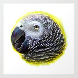 African grey parrot realistic painting Art Print