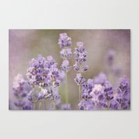 lavender Canvas Prints featuring lavender by Iris Lehnhardt