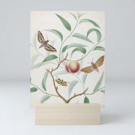 Vintage Botanical Print - Peach and Moths Mini Art Print