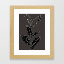 Rock Pituri (Also known as Bone Marrow Tobacco) - Nicotiana gossei Framed Art Print
