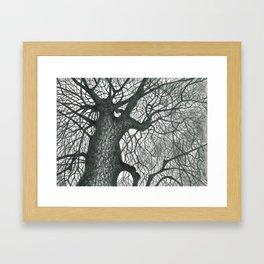 Massive Tree Framed Art Print