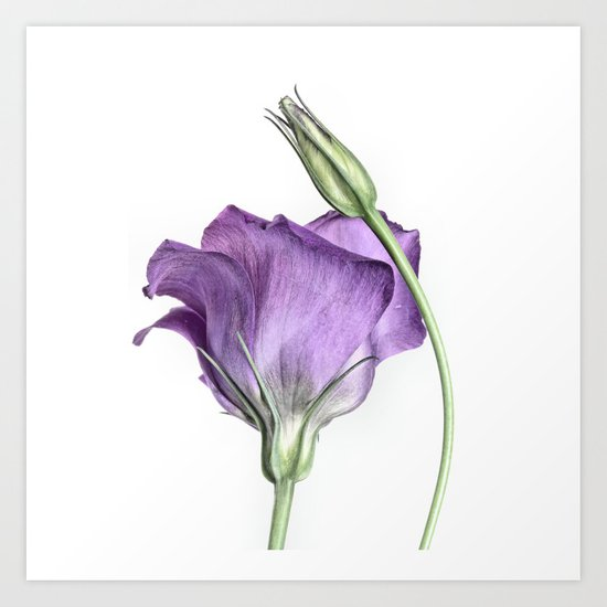 Purple Princess... Art Print