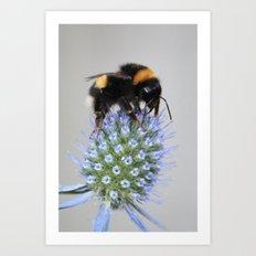 Bee on seaholly Art Print