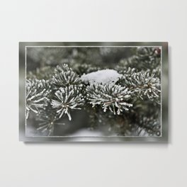 Snowy Evergreen Metal Print