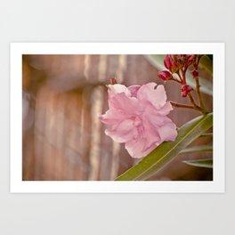 Pink laurel Art Print