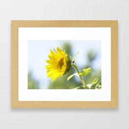 Ladybug and it's Sunflower Framed Art Print