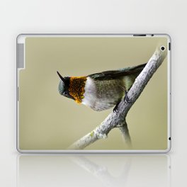 Hummingbird Portrait Laptop & iPad Skin