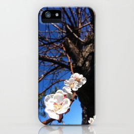 Apricot Tree in Bloom iPhone Case
