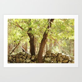 Old Rock Wall - Yosemite Valley Art Print
