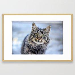 Cat Eyed Framed Art Print