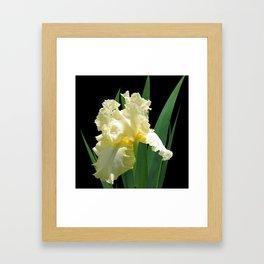 Iris 'Elegant Impressions' on black Framed Art Print