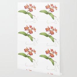 Red Orange Orchid Wallpaper