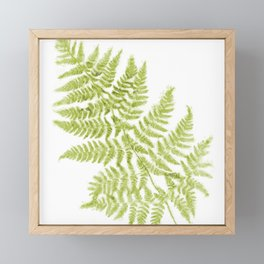 Fresh Fern Modern Botanical Framed Mini Art Print