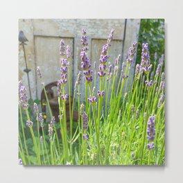 Blooming Garden Lavender Metal Print