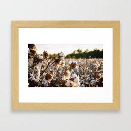 Cotton Field 19 Framed Art Print