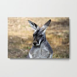 Grey Kangaroo Metal Print