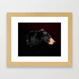 Young Black Bear Portrait Framed Art Print