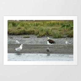 Eagle and Pals waiting for food Art Print