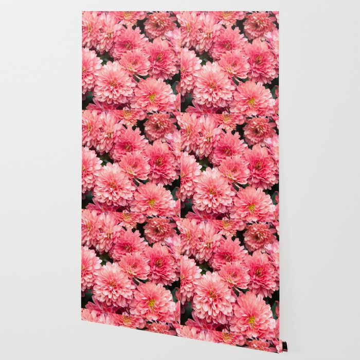 Autumn Kiss Chrysanthemums #1 #floral #art #Society6 Wallpaper