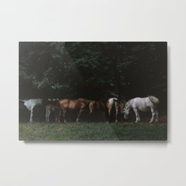 Wild Horses | Nature and Landscape Photography Metal Print