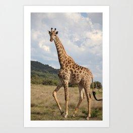 Giraffe_front Art Print