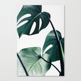Leaves Canvas Print