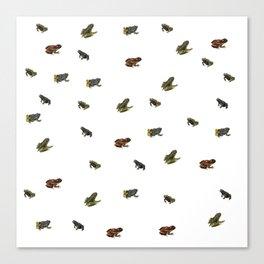 Teeny Tiny Frogs Canvas Print