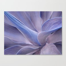 Shades of Lilac Agave Attenuata  Canvas Print