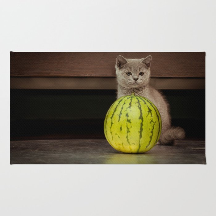 British gray kitten play with a juicy water-melon Rug